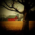 Tree And Barn by Michael L Kimble