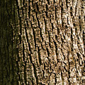Tree Bark by Cristian M Vela