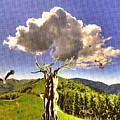 Tree Blossom 1 by Pemaro