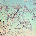 Tree Branches Reaching For Heaven by Patricia Awapara