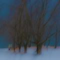Tree Dreams by Stewart Helberg