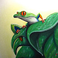 Tree Frog by Shane Whitlock