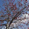 Tree In Benalmadena by Chani Demuijlder
