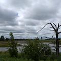 Tree In The Wetland by Linda Kerkau
