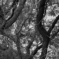 Tree  by John Bichler