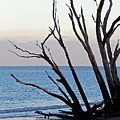 Tree On Boneyard Beach by Jennifer Robin