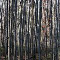 Treez by Lon Dittrick