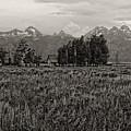 Tres Tetons by Hugh Smith