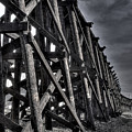 Tressel From The West by David Patterson
