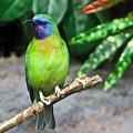 Tropical Bird by Douglas Barnett