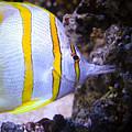 Tropical Fish by Brenton Woodruff