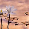Tropical Lily by Joe Mamer
