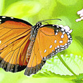 Tropical Queen Butterfly Framing Image by A Gurmankin