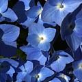True Blue by Annie Babineau