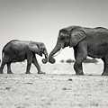 Trunk Pumping Elephants by Vicki Jauron