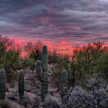 Tucson Sunset by Charlie Alolkoy