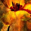 Tulip by Bernard Jaubert