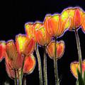 Tulips by Alexander Fedin