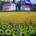 Tuscan Sunflowers by Charles Vaughn
