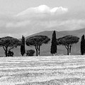 Tuscany Trees by Julian Perry