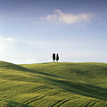 Twin Cypresses by Michael Hudson