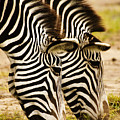 Twins In Stripes by Michele Burgess