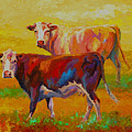 Two Cows by Marion Rose