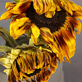 Two Sunflowers Tournesols by William Dey