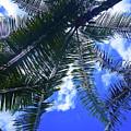 Under The Palms by Davids Digits