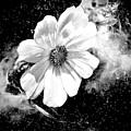 Universal Floral by Debra Lynch