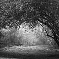 Untitled by Ayesha  Lakes