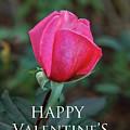 Valentine Rose by Robert Bales