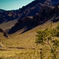 Valley Of Fire Nevada by Patrick  Flynn