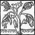 Vegetable Lamb Myth by Granger