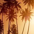 View Of Tahiti by Joe Carini - Printscapes