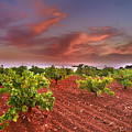 Vineyards At Sunset by Guido Montanes Castillo