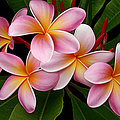 Wailua Sweet Love by Sharon Mau
