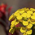Wallflower by Robert Potts