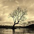 Wanaka Tree - New Zealand by Unsplash