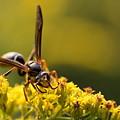 Wasp On Wildflower by Angela Rath
