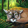 Watching  Florida Panther by Darlene Green