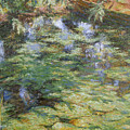 Water-lilies by Robert Nizamov