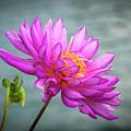 Water Lily by Randy J Heath
