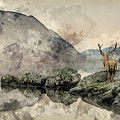 Watercolor Painting Of Stunning Powerful Red Deer Stag Looks Out by Matthew Gibson