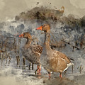 Watercolour Painting Of Beautiful Greylag Goose Anser Anser In W by Matthew Gibson