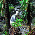 Waterfall El Yunque National Forest by Thomas R Fletcher