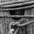 Weathered Rope by Terri Mongeon