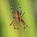 Web Walker by Robert Potts