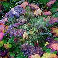 Wet Washington Autumn Fantasy 1 by John Carey