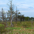 Wetland by Linda Kerkau